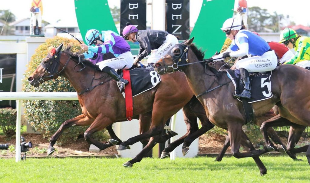 moonshine lady wins at doombin 1200m